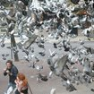 Landlord Sues Tenant For Feeding Her Pooping Pigeon Pals