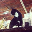 Love Your Local Bodega Cat? Share Photos With Us