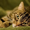 Another Beloved Cat Disappears At JFK Airport