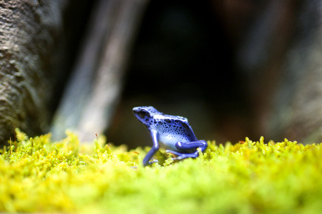 Photos: 200 Gorgeous, Colorful (And Poisonous) Frogs Now Living At The AMNH