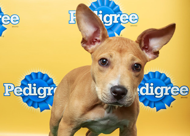 Puppy Bowl X Line-Up Announced, Puppy Bowl Experience Comes To Times Square