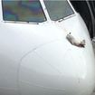 Bird Strike Forces Florida-bound Plane To Land At JFK