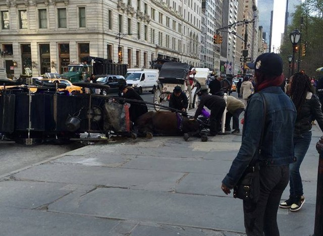 UPDATE: 'Spooked' Carriage Horse Collapses On Central Park South