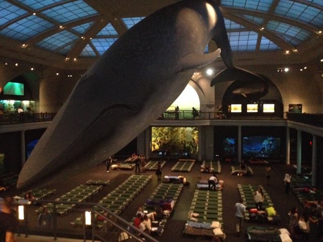 Sneak Peek Of First Museum Of Natural History Adult Sleepover
