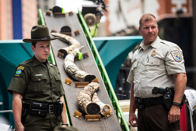 Confiscated Ivory Crushed In Times Square To Raise Awareness About Elephant Slaughters