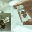 Watch A Bee Get Shampooed By The AMNH's Insect Stylist