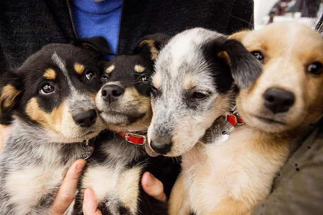 Video, Photos: Rescue Dogs & Cats Are The Most Adorable Dogs & Cats