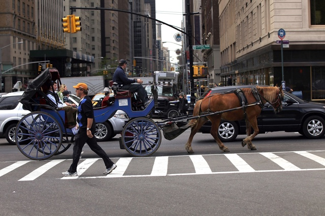 It Now Costs $54 For A 20 Minute NYC Carriage Horse Ride