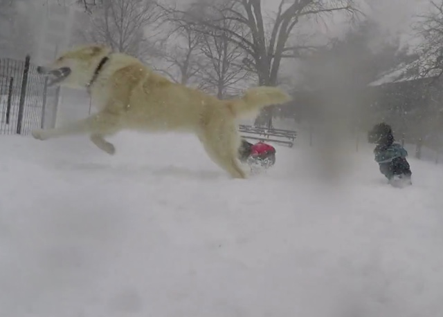 GoPro Video: Area Dog Investigates The Blizzard On The Upper West Side
