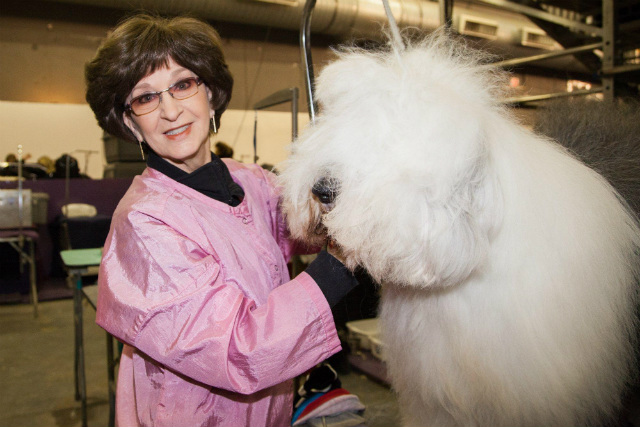 Video: Humans Explain Their Mysterious Devotion To The Westminster Dog Show