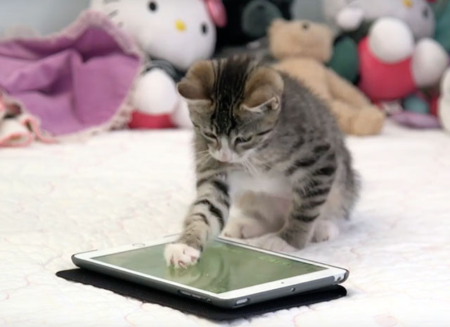 This Is What It Looks Like When Cats Play On An iPad (And This Is Why They Should)