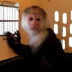 Adorable Illegal Monkey Taken From Long Island Home