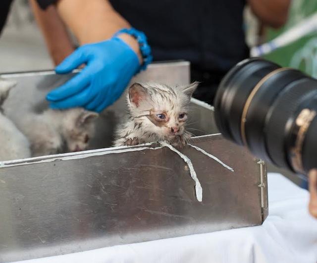 4 Kittens Survive Fire In Basement Of Brooklyn Appliance Store