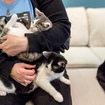 Caturday CUTE: Brooklyn\'s First Cat Cafe Is OPEN