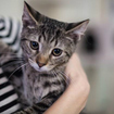 Brooklyn\'s First Permanent Cat Cafe Opening In Brooklyn Heights This Weekend