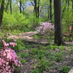 Secret Section Of Central Park Will Finally Open To The Public