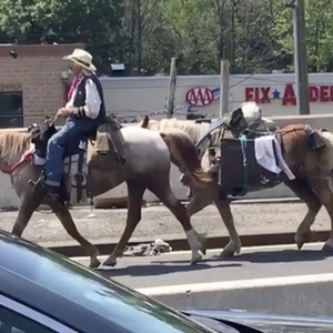Mysterious Urban Cowboy Causes Traffic Jam While Riding Horse Over Outerbridge Crossing