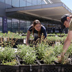 Video: Did You Know There\'s A Little Vegetable Farm At JFK Airport?