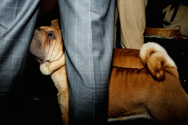 Photos: The Very Good Boys & Girls Of The Westminster Dog Show
