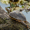 Man Snuck Tiny Endangered Turtles Into JFK By Labeling Them As 'Snacks'