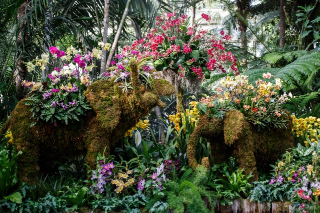Photos: Jaw-Dropping Display Of Flora For NYBG's 'Thailand' Orchid Show