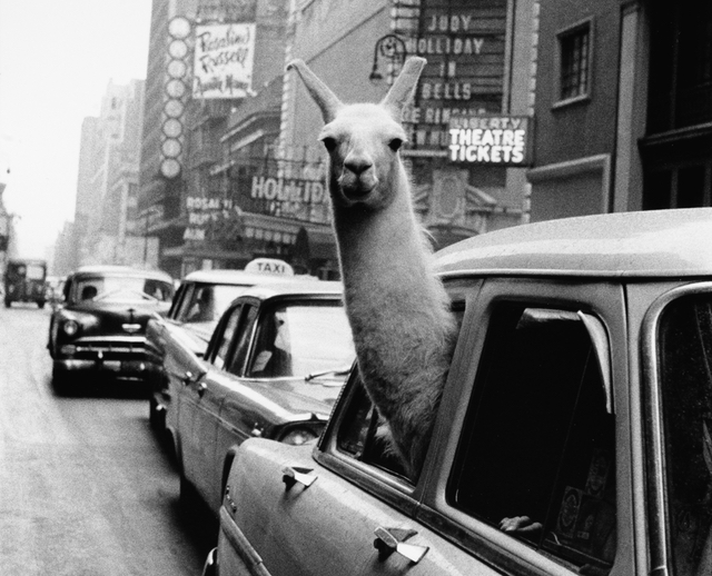 Check Out These Marvelous Old NYC Photos Hitting The Auction Block