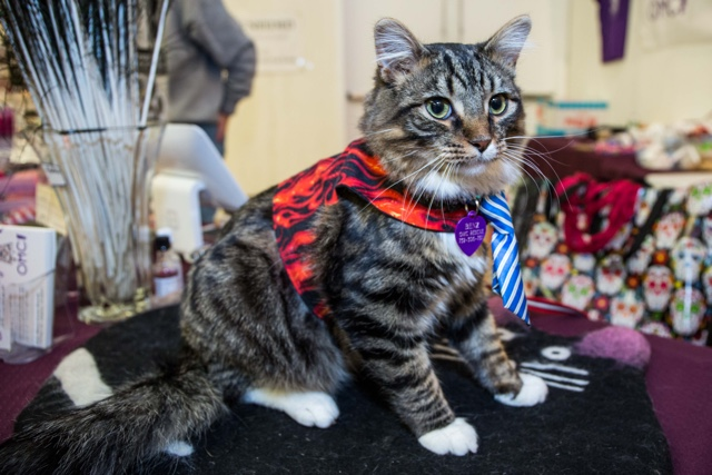 Photos: Adorable Kitties Attend First-Ever 'Cat Camp' In Chelsea