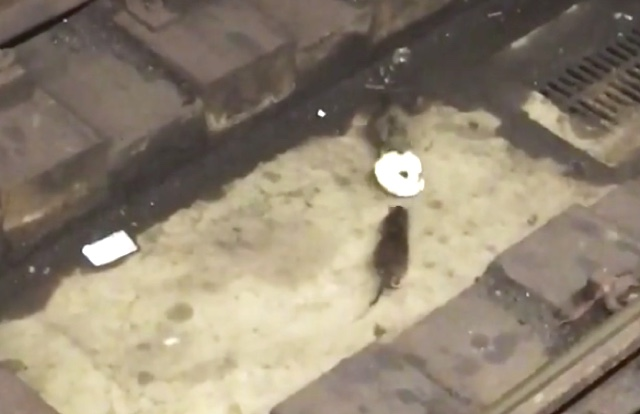 This Video Of Two Subway Rats Fighting Over A Bagel Can Really Teach Us Something