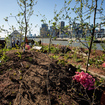 An Edible Forest Is Floating Around NYC On A Barge