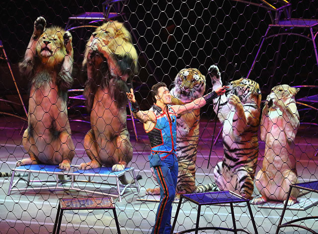 Photos, Video: The Final Ringling Bros. Circus Performance Ever