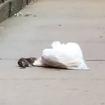 Video: New York's Strongest Rat