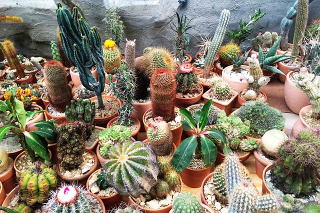 L.A.'s Favorite Cactus Store Opens Pop-Up In Chinatown Greenhouse