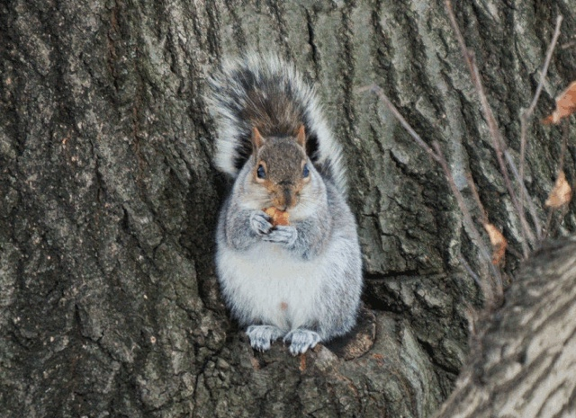 Troubling New Theory Emerges In Flesh-Eating Prospect Park Squirrel Case