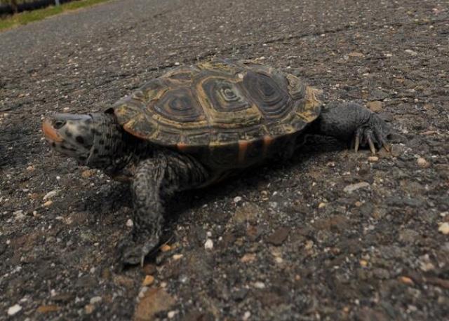 Turtles Delay Flights At JFK Airport With Mating Ritual