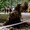 Woman Suffers Fractured Neck After Central Park Tree Crushes Her