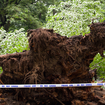 [UPDATED] Massive Tree Falls In Central Park, Injuring Several Children