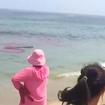 Video: Panic & 'So Much Blood' On Cape Cod Beach As Brooklyn Teens Flee Shark Attack