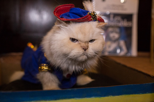 Photos: Cats In Couture At The Algonquin Hotel Cat Fashion Show