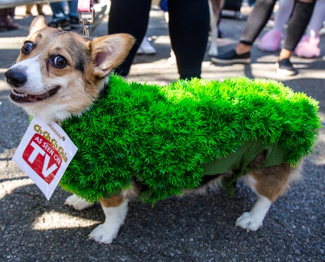 Photos: All The Good Dogs At The 2017 Tompkins Square Halloween Parade