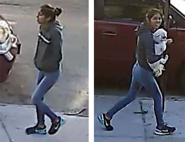 NYPD: This Woman Stole A Shih-Tzu From A Queens Yard