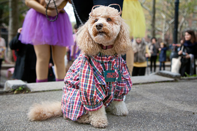 MORE Dogs In Costumes At The Fort Greene Great PUPkin This Weekend