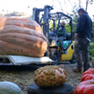The Biggest Pumpkin In The World Is Now On View In NYC