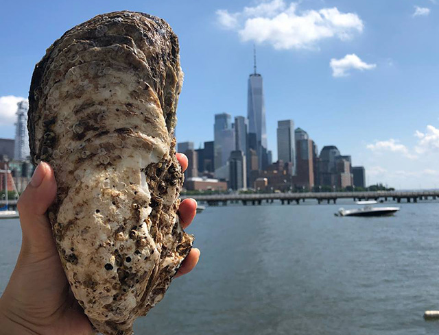 'It's The Size Of A Shoe': Huge Oyster Found In Hudson River, By Pier 40