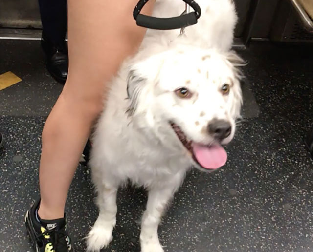 The MTA Told Me To Call 911 On This Very Good Dog