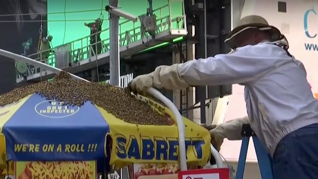 Watch Live: The Bees Have Taken Over A Hot Dog Stand In Times Square