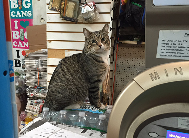 Celebrate International Cat Day With NYC's Official Cat, The Bodega Cat