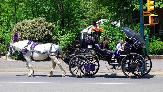 Advocates Want Carriage Horses Off The Streets During Heat Advisories