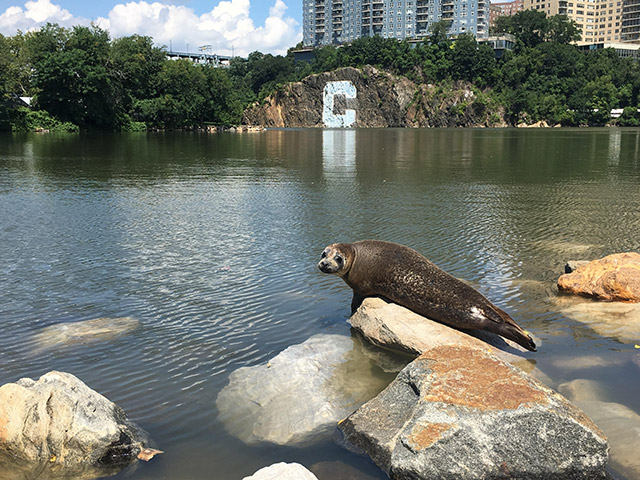 Photos: Beautiful Inwood Seal Strikes A Pose