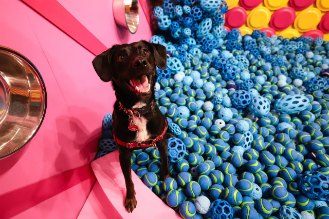 Photos: Dogs Get Their Own Instagrammable Pop-Up At Immersive 'Human's Best Friend'