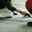 Video: Woman Pets 'Rat' On NYC Street, Zardulu Claims Credit